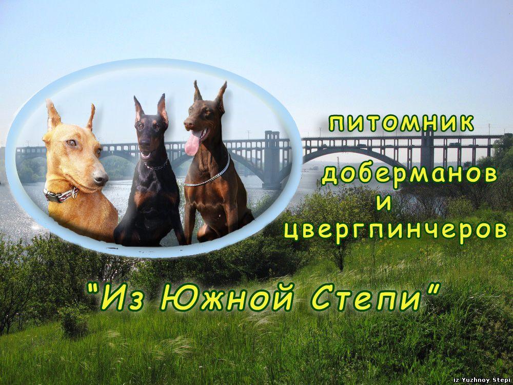 щенки добермана, щенки цвергпинчера, питомник доберманов